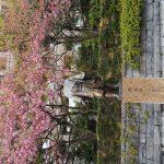 仙台藩縁の思想家